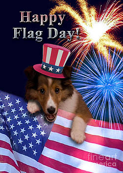 Jeanette K - Flag Day Sheltie Puppy