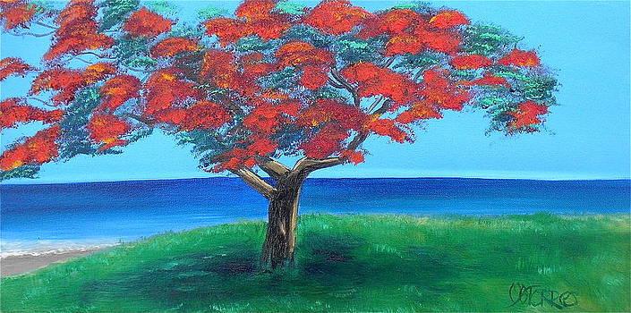 Flamboyan Overlooking Ocean by Melissa Torres
