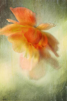 Flame by Annie Snel