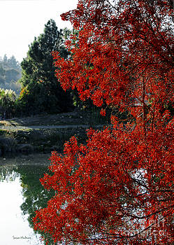 Susan Wiedmann - Flame Red Tree