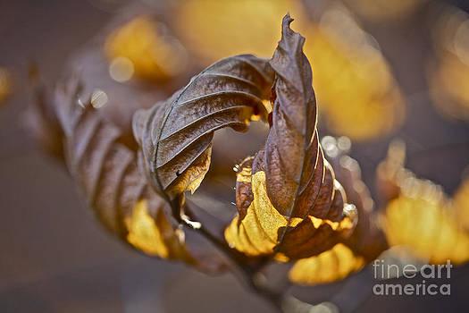 Flames of Autumn  Love . by  Andrzej Goszcz
