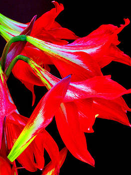 Flaming Passion by Cheryl Ehlers