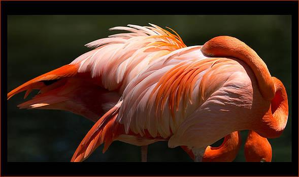Flamingo Abyss by John Kunze
