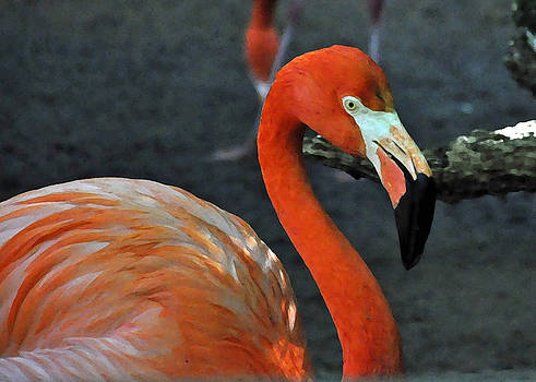 Flamingo by Cherie Haines