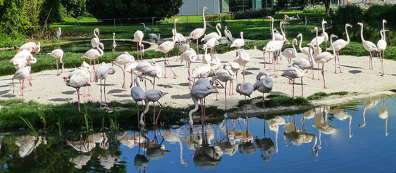 Flamingo Circle Stuttgart by Blago Simeonov