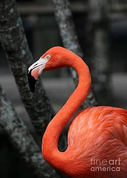 Sabrina L Ryan - Flamingo Curve