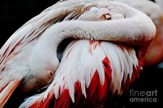 Flamingo by Diana Vitoshka