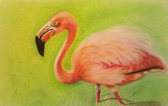 Flamingo II. by Paula Steffensen