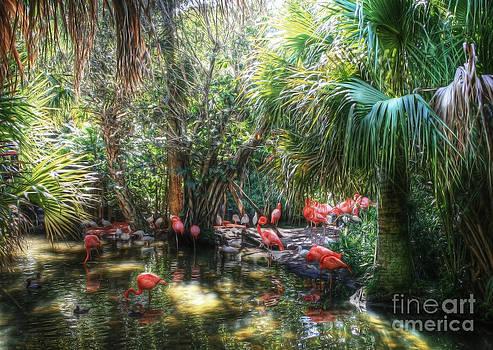 Flamingo Oasis by Loyda Herrera