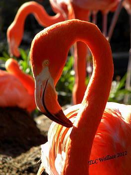 Flamingo by Tammy Wallace