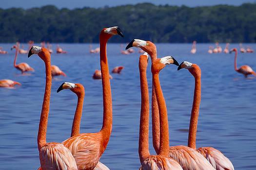 Skip Hunt - Flamingos 1