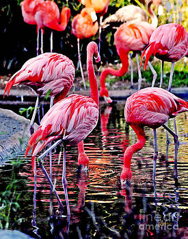 Jeff McJunkin - Flamingos by Jeff McJunkin