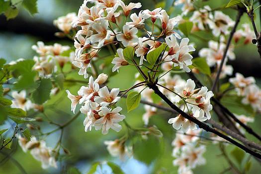 Flashy Flowering Beauty by Kim Pate