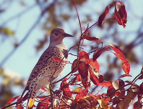 Flicker in Autumn by Melanie Lankford Photography