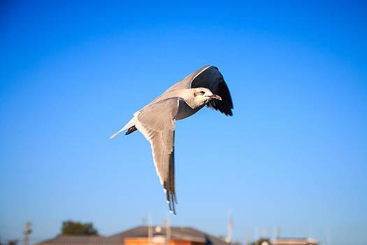 Flight by Brent Roberts