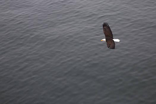 Flight by Joanna Madloch