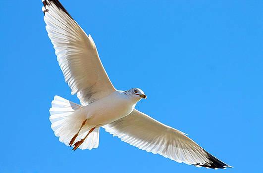 Flight by Lorri Crossno