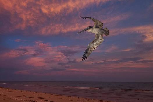 Flight over Enchanted beach by Robert Bascelli
