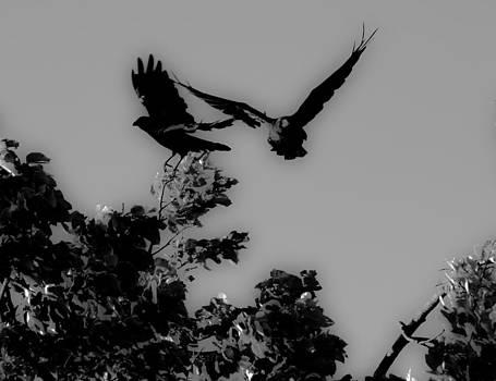 Edward Kay - Flight-Path