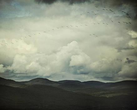 Flight Path by Irene Suchocki