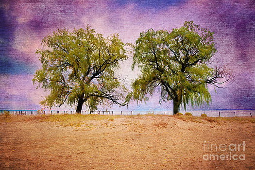 Flirting Trees by Jeanette Brown