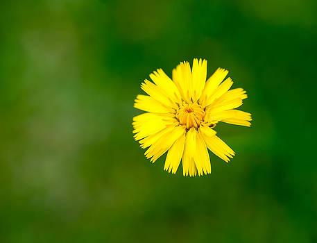 Floating Flower by Kirk Shorte