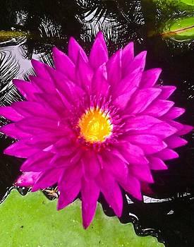 Floating Flower by Lisa Merman Bender