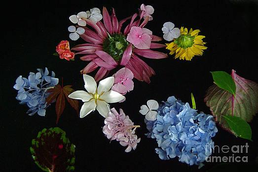 Byron Varvarigos - Floating Flowers