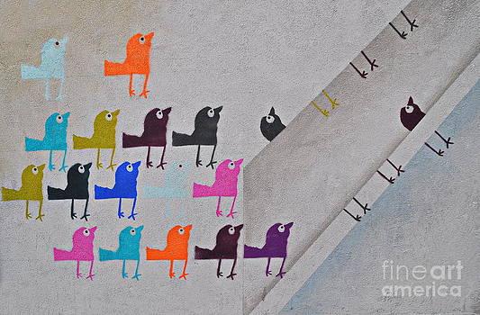 Andrea Kollo - Flock of Birds