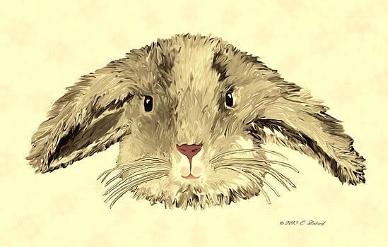 Floppy Bunny by Elizabeth S Zulauf