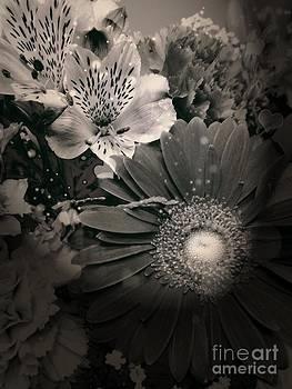 Floral Beauty by Deborah MacQuarrie