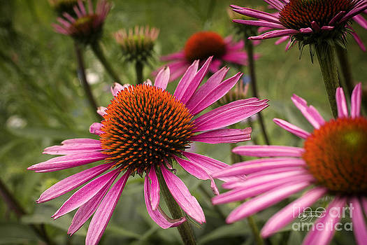 Floral Delight 2 by Cris Hayes