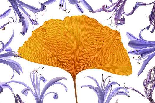 Floral Fantasy I by Henrique Souto