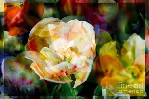 Sonja Quintero - Floral Galore