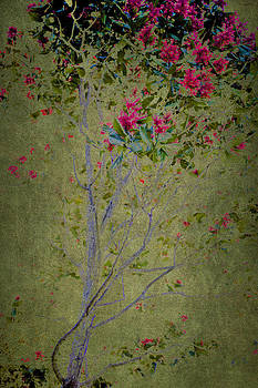 Floral Interlace by Linde Townsend