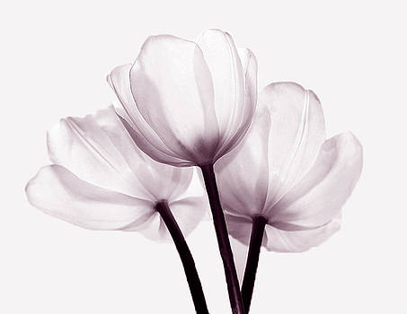 Floral by Nancie Rowan
