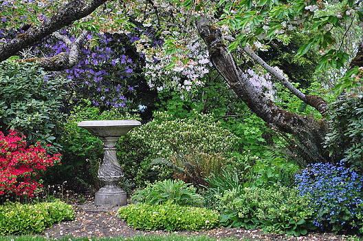Floral Serenity by Carolyn Burns Bass