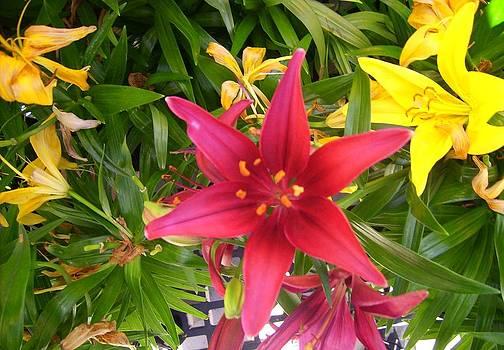 Floral Stars by Janice W Deetscreek