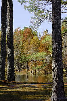 Judy Hall-Folde - Florida Autumn