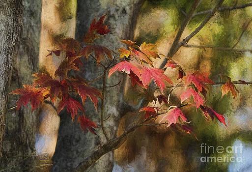 Deborah Benoit - Florida Autumn Leaves
