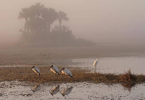 Juergen Roth - Florida Everglades Wood Storks