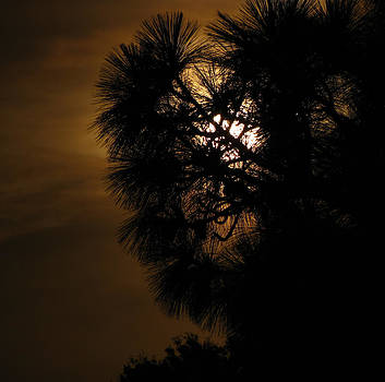 Florida Moonrise No. 1 by Phil Penne