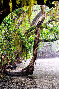 Christopher Holmes - Florida Naturally 3