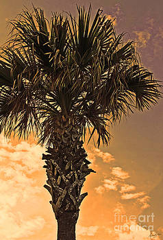 Florida Palm by Melissa Sherbon