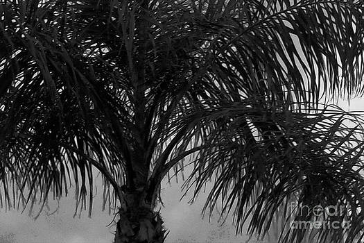 Florida Palm Tree 5 by Bruce Tubman