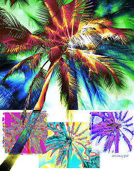 Florida Palms by Marcy Gold