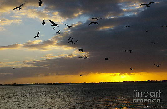 Tannis  Baldwin - Florida Sunset