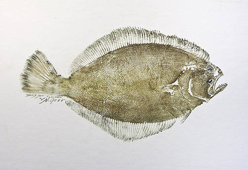 Flounder by Nancy Gorr