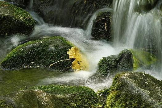 Flow by Kimberly Oegerle