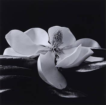 Flower 06 by Haruo Kaneko